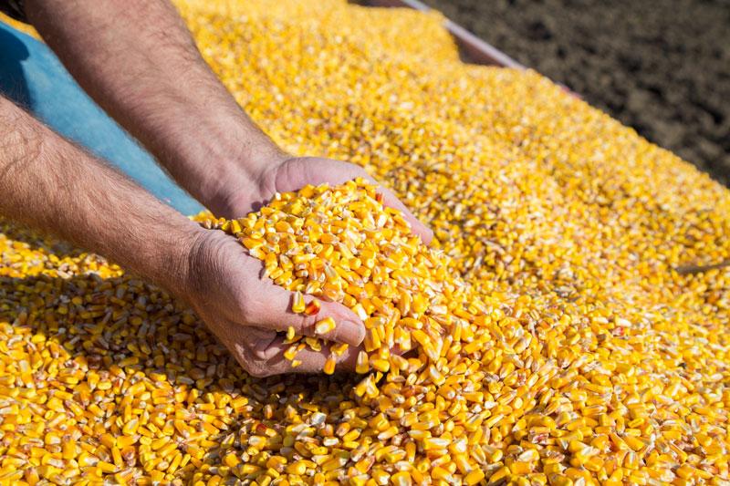 Jack Larson Seeds Grain